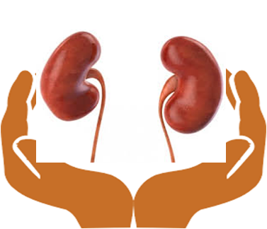 Kidney Care is Essential as it Performs Several Tasks